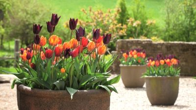 10 Lovely Blooming Flowers to Beautify Your Backyard