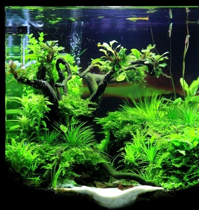 This Is Make A Nice Aquarium Design