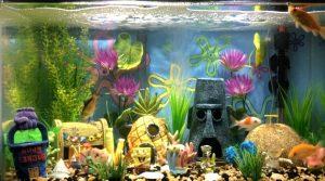 Here's How to Make a Great Aquarium Design