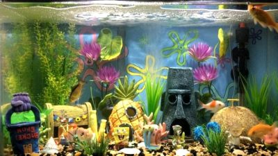 This is Make a Nice Aquarium Design
