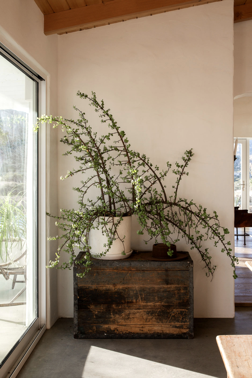 modern desert adobe house tour wild plant stying